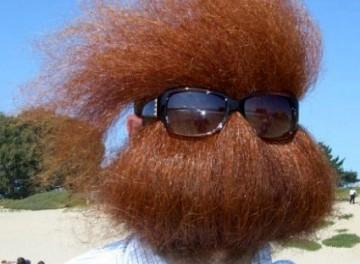 Les moustaches sont moins effrayantes que les barbes?