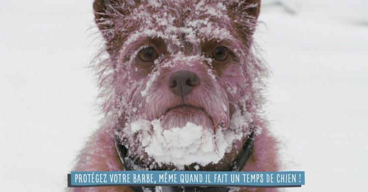 Barbe sous la neige