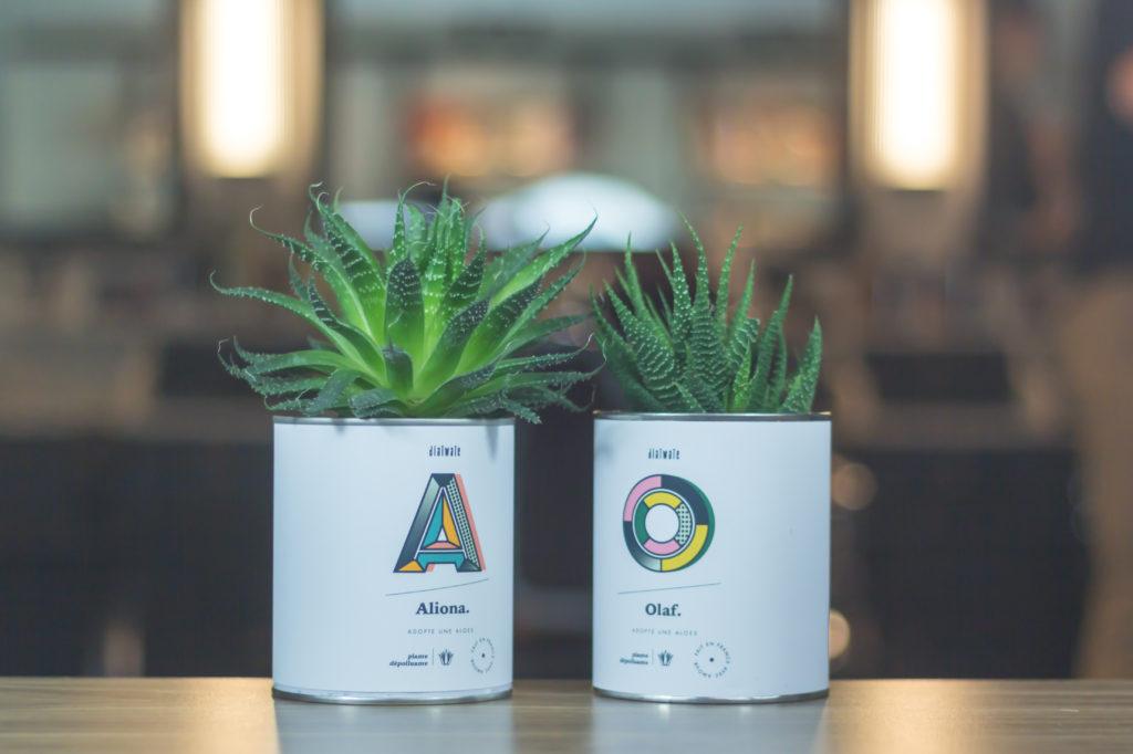 Diaïwaïe à votre service pour adopter une Aloe !