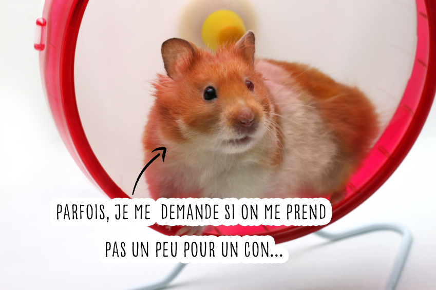 hamster roue animaux compagnie