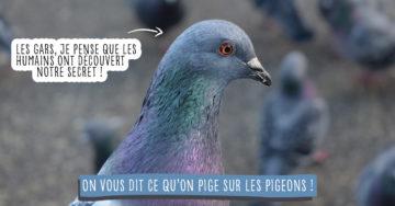 Les secrets des pigeons