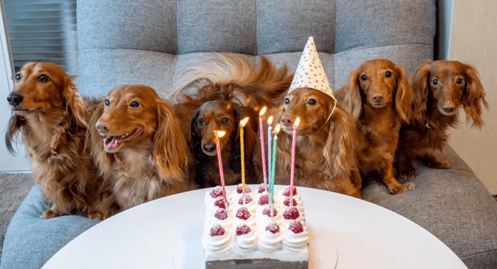 animaux de compagnie anniversaire